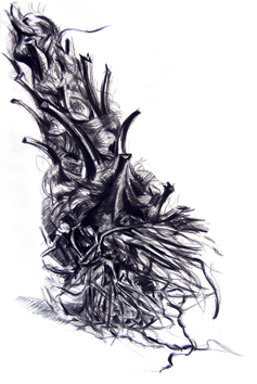 Original signed drawing de  : Large root of palm tree