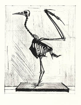 Original etching de  : Bird Skeleton
