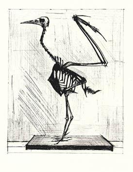 Buffet Bernard : Gravure : Squelette d'oiseau