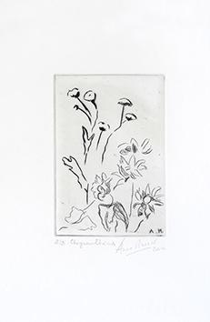 Gravure originale signée de  : Chrysanthèmes