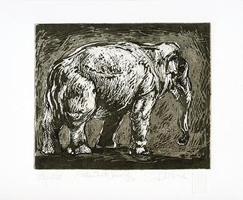 Gravure originale signée de  : Elephant