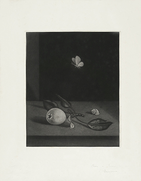 Original signed mezzotint de  : Nature morte au papillon