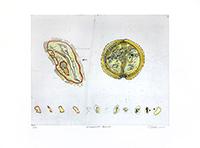 Signierte originale Radierung de  : Humunculus Americano