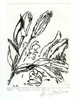 Signierte originale Kaltnadelradierung de  : Lis, entre autres fleurs