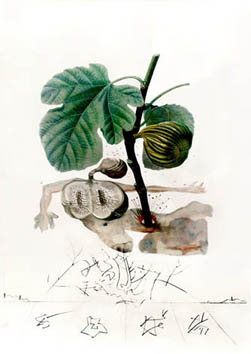 Dali Salvador : Gravure originale : Homme figuier