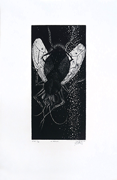Original signed aquatint de  : The fly