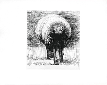 Gravure originale de  : Sheep back view
