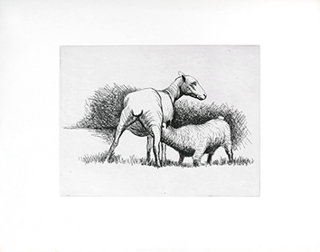 Gravure originale de  : Shorn sheep with lamb