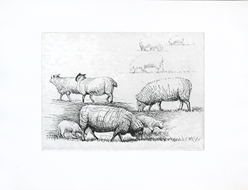 Gravure originale de  : Sheep in field