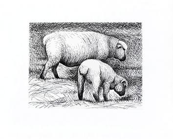 Originale Radierung de  : Fat lambs