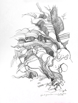 Signed drawing in pencil de  : Grés et genevriers à Navaho Moutain