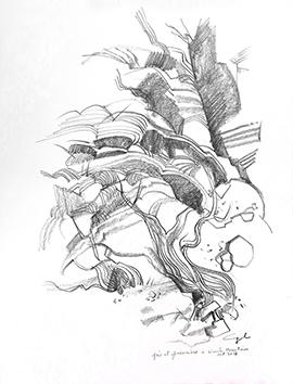 Dessin au crayon signé de  : Grés et genevriers à Navaho Moutain