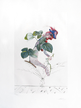 Original signed print de  : Rasberry Bush