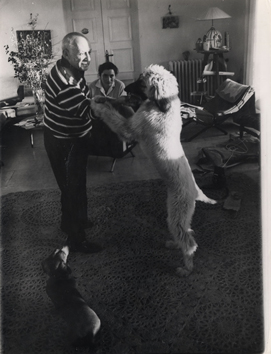 Original photograph de Picasso Pablo : Picasso playing with his dogs