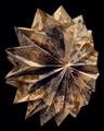 Origami, Véronique Agostini