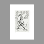 Original signed etching de Springer Ferdinand : L'arbre