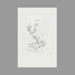 Original engraving de Hasegawa Kiyoshi : Poupée délaissée ou Poupée et groseiller