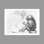 Trémois Pierre-Yves - Le babouin