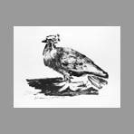 Picasso Pablo - La colombe