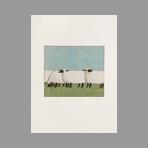 Original signed print de Lalanne Francois-Xavier : Sheeps